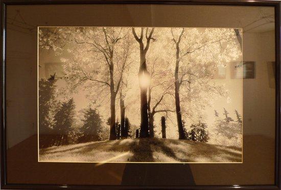 Rober Skubacz: Fotografie Bäume im Gegenlicht
