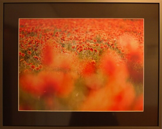 Roter Mohn 2, Fotografie von Robert Skubacz