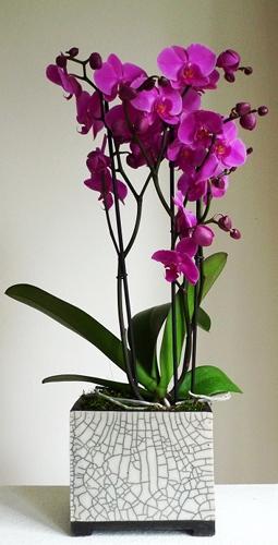 orchideen im topf keramik kunst blog. Black Bedroom Furniture Sets. Home Design Ideas