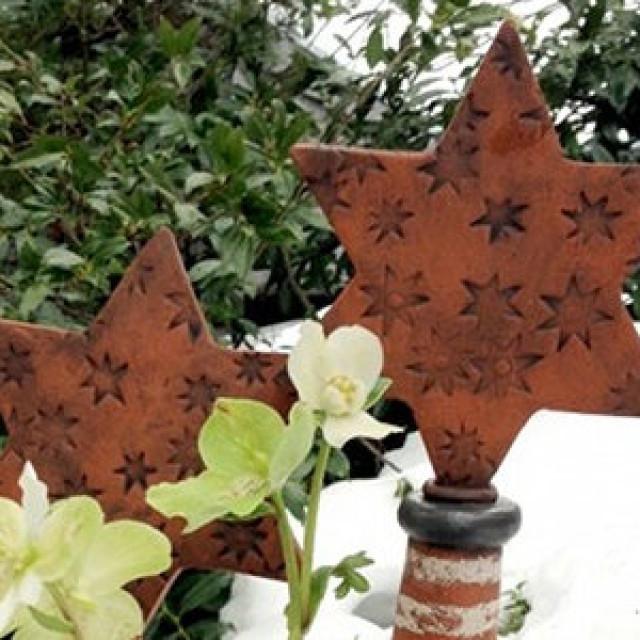 Christrose und Weihnachtssterne