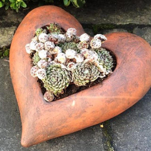 Gartenideen: Keramik Herz Pflanzgefäß